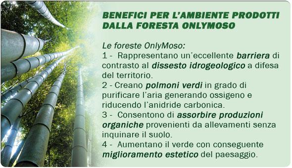 Eco investi in bamb gigante onlymoso la tua miniera verde for Vendita piante bambu gigante